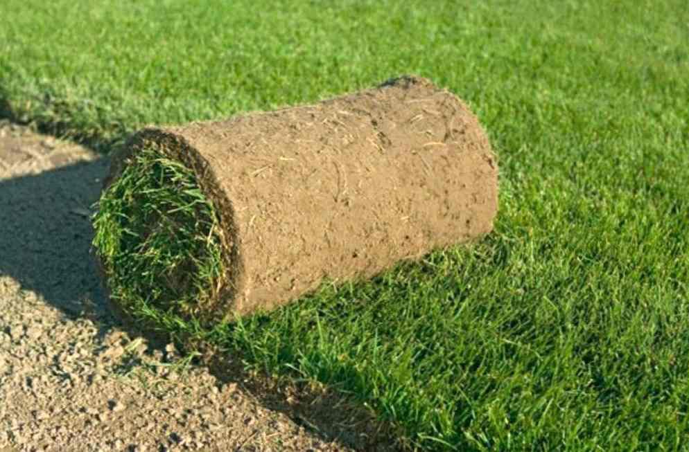 Где в Москве заказать рулонный газон? Воспользуйтесь услугами компании Горгазон, отзывы о которой только положительные.