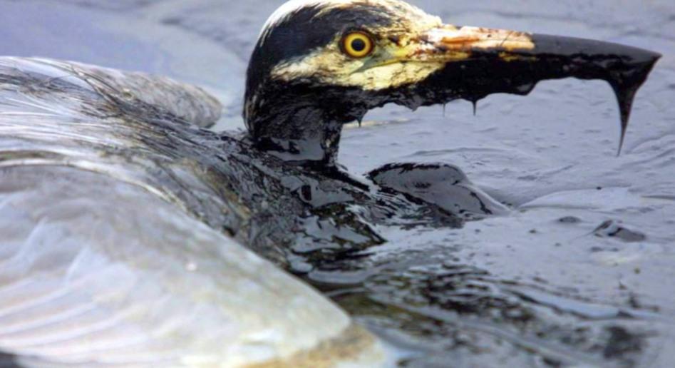 В чем заключается ликвидация аварийных разливов нефти?