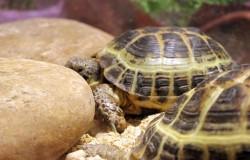 Зачем нужен террариум для черепах?