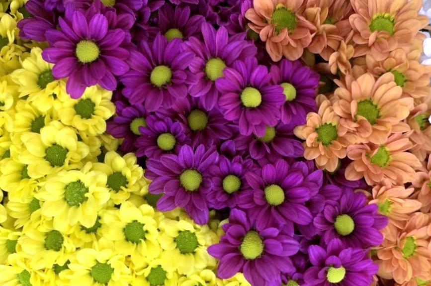 Плюсы заказа цветов через интернет